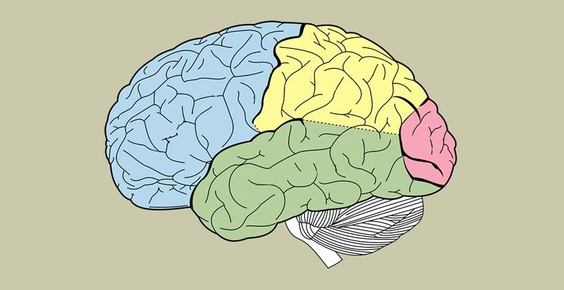 Transkortikal Duyusal Afazi Nedir?