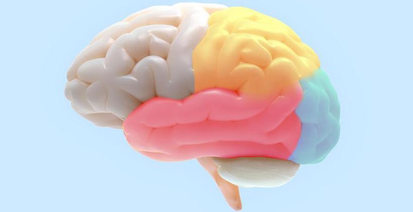 Beyin ve Beyinin Yapısı