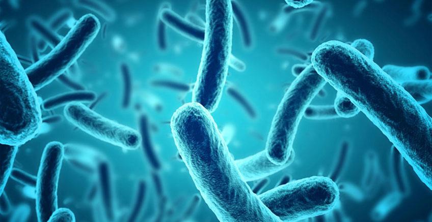 Mikroplar: Bakteriler, Virüsler, Mantarlar ve Protozoalar