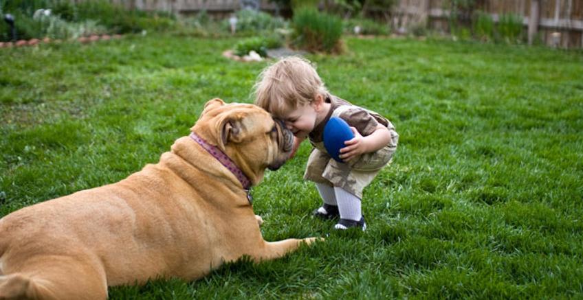 Evcil Hayvanlar ve Çocuklar